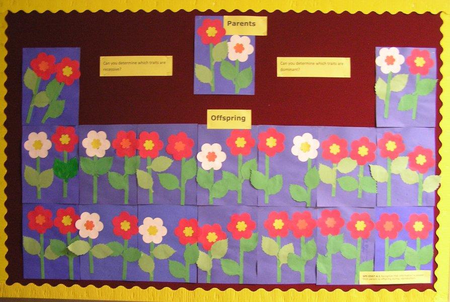 Flower Genetics