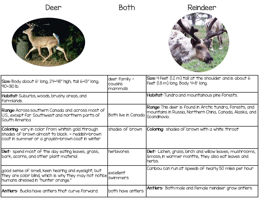 Venn Diagram Comparing Deer to Reindeer