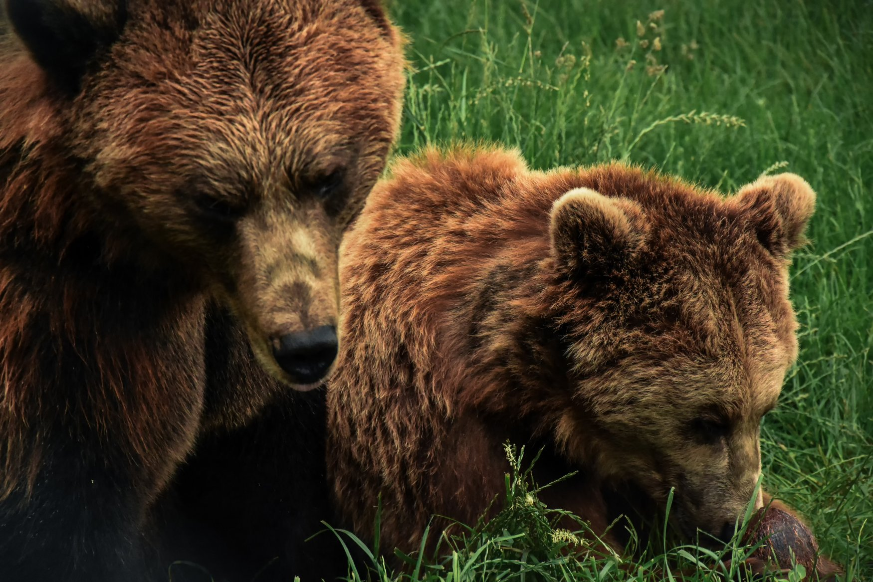Student Report on Bears