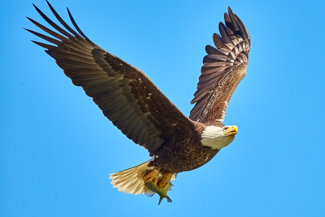 Student Report on Eagles