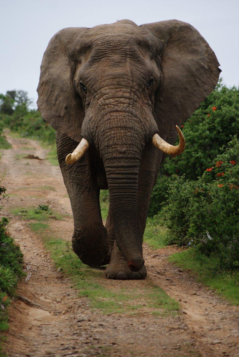 Student Report on Elephants