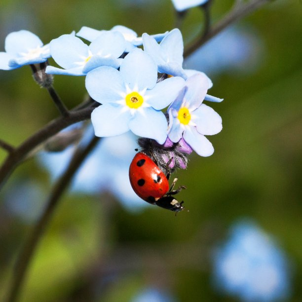 Student Report on Ladybugs