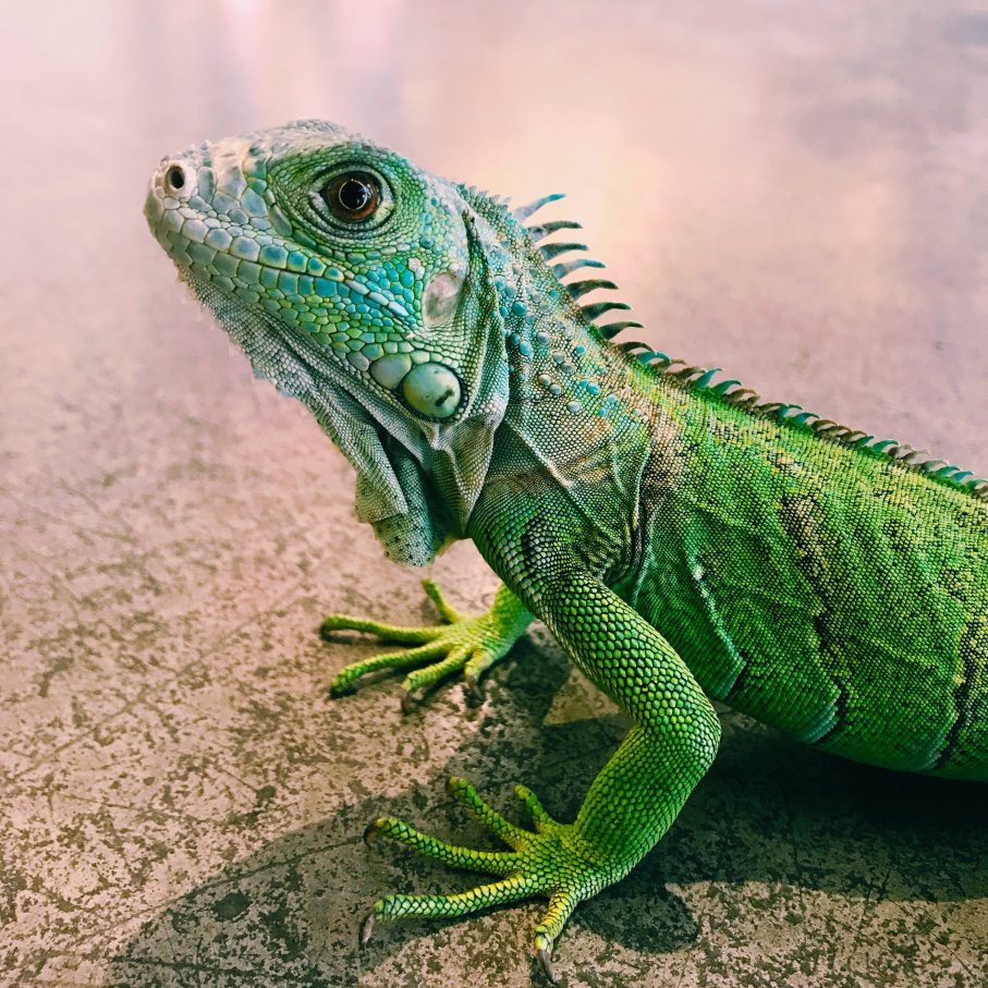 Student Report on Lizards