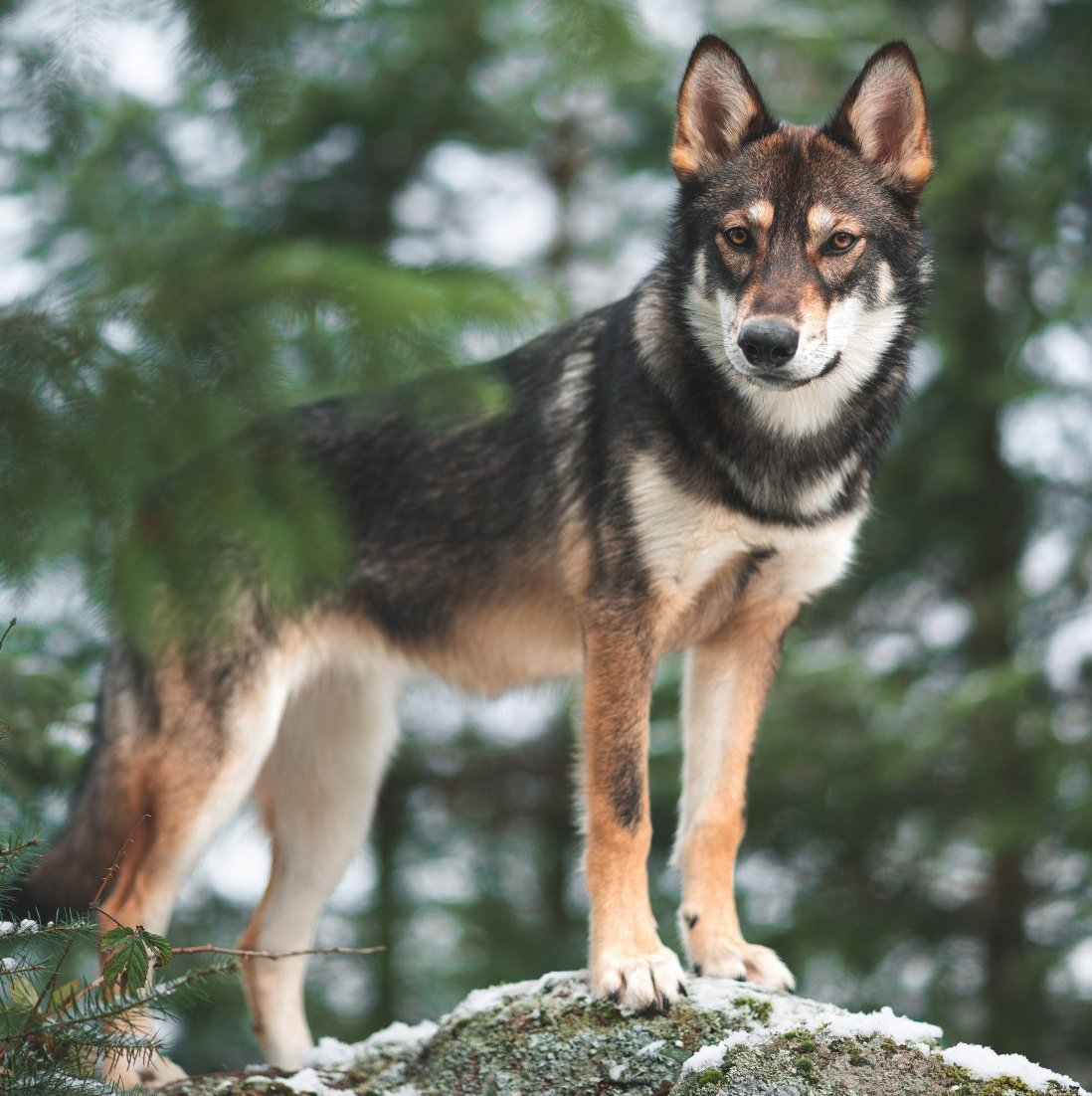 Student Report on Wolves